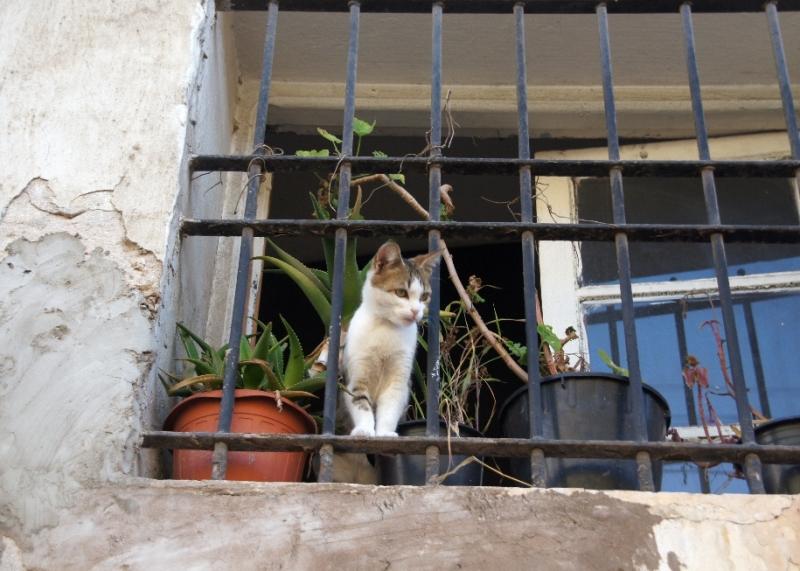 Marokanische Katze