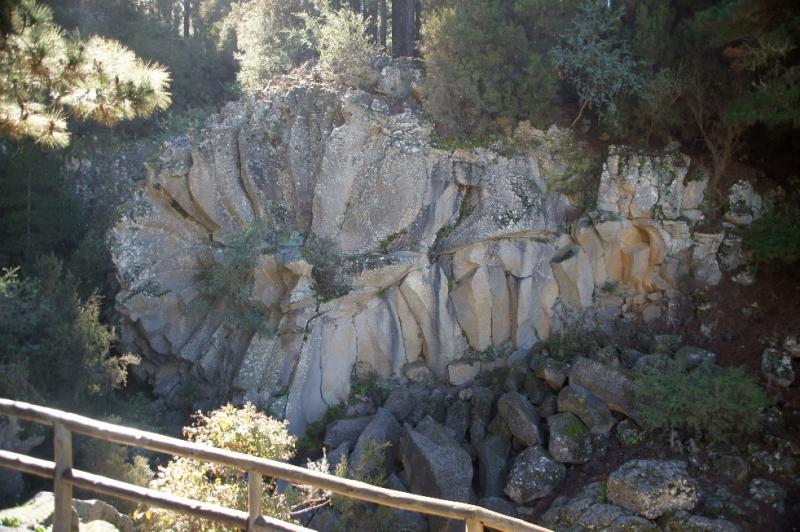 Steinrose auf der Abfahrt vom Teide.