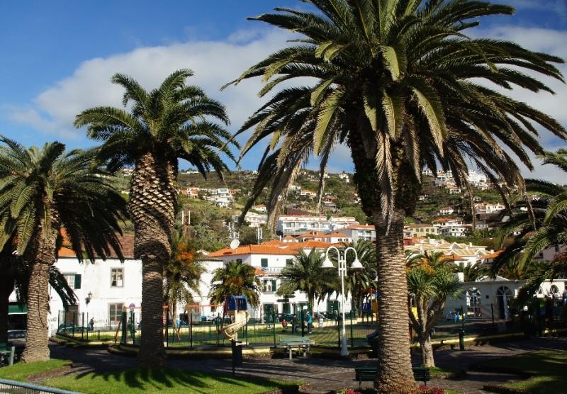 Gewaltige Palmen auf dem zentralen Platz