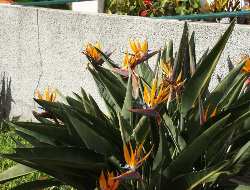 Blumen sind hier auch im Januar bereits unheimlich viele zu finden.