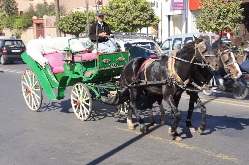 Für Touristen standen überall Kutschen bereit, teilweise sogar 30-40 Stück hintereinander. Allerdings rochen auch alle Pferde relativ streng und machten so keine große Werbung für eine Kutschfahrt.