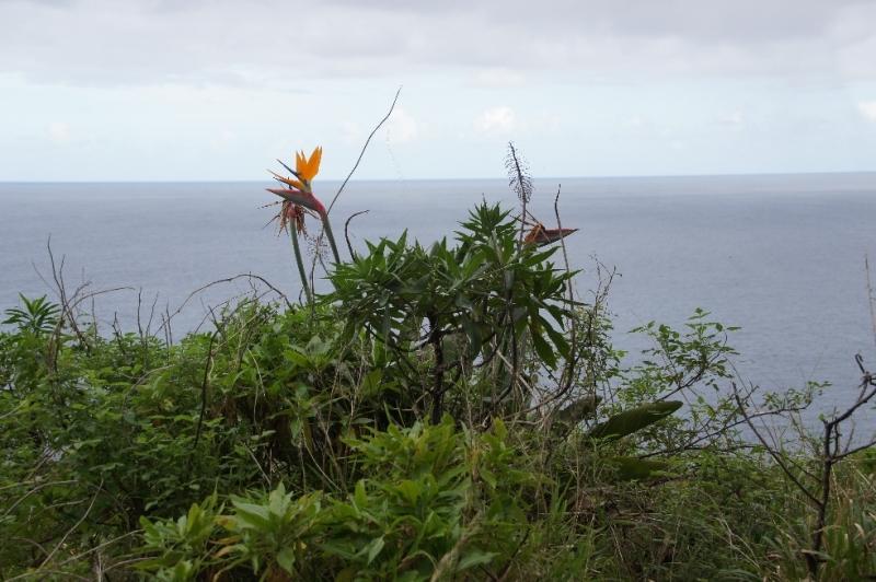 Trotz Winterzeit, blühte auf Madeira bereits eine ganze Menge. Doch hatte die Ostküste ein Jahr vorher wesentlich mehr verschiedene Blumen.