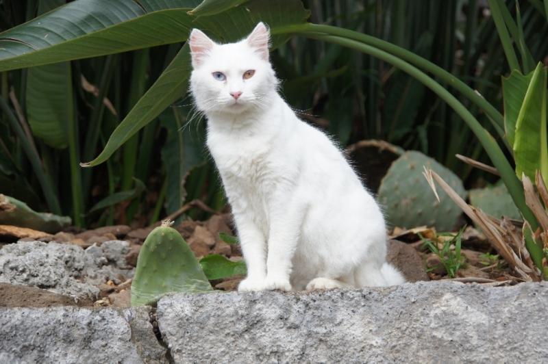 Wir wurden immer beobachtet von dieser Katze. Hoffentlich ein gutes Omen.